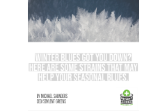 Maine winter got you down? Here are some strains that may help your seasonal blues.